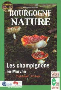 Les champignons en Morvan